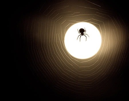 spider in moonlight - hacker image?