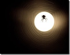 spider-and-web-moonlight-silhouette1.5w